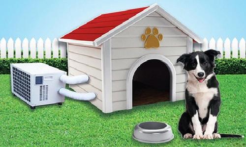 Los Accesorios para mascotas ¿son siempre útiles?