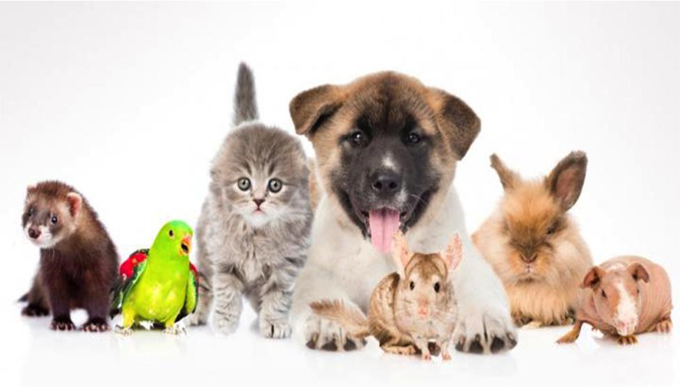 Tiendas para animales